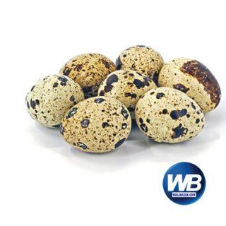 Koel Eggs 12 pcs