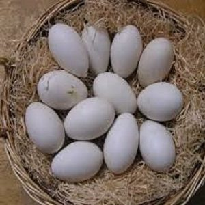 Duck Eggs (Deshi) Pack 12 pcs