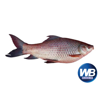 Rui Fish (Net Weight ± 30 gm) 650 gm 1019204