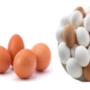 100 Egg - Wow Offer