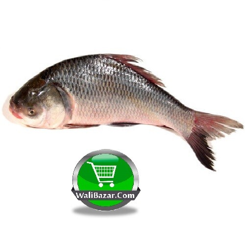 Catla (Katla) Fish After Cutting (Net Weight ± 50 gm) 2.5 kg
