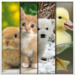 PET-ANIMAL BAZAR