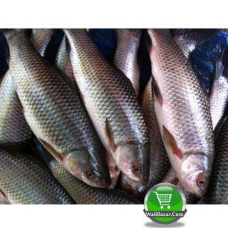 Nola fish 800 gm