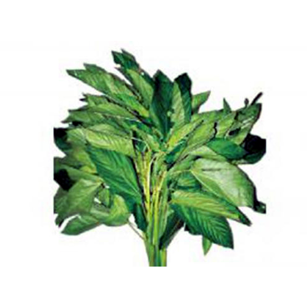 Jute spinach