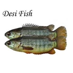 Desi Fish