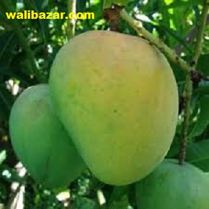Mango (Himsagor) 5 kg
