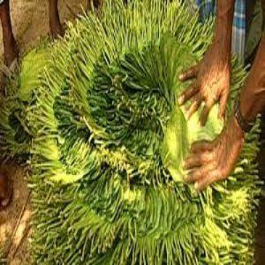 Rajshai pan 1/2 bira